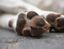 Sanear conta com serviço gratuito de recolhimento de animais mortos em vias públicas